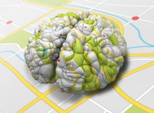 Определенные нейроны, которые отображают воспоминания, теперь идентифицированы в человеческом мозге