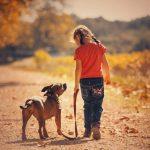 Воздействие собак в раннем возрасте может снизить риск развития шизофрении