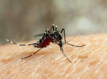 Комары созданы для отражения вируса денге