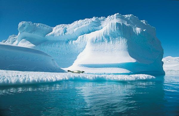 Пробелы в научных дисциплинах по экологии в Арктике