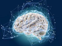 Клетки мозга защищают мышцы от истощения