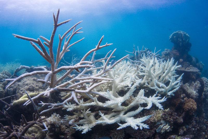 Потепление кислых океанов может почти уничтожить места обитания коралловых рифов к 2100 году