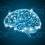 Как дофамин управляет мозговой активностью