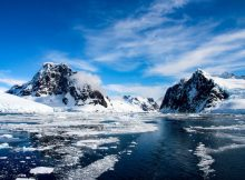 Следы древнего тропического леса в Антарктиде указывают на более теплый доисторический мир