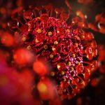 Созданный вирус может блокировать коронавирусные инфекции, показали исследования на мышах