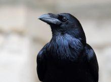 Как птицы развивали большие мозги