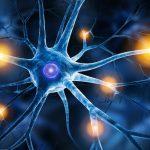 Ученые регенерируют нейроны у мышей с повреждением спинного мозга и повреждением зрительного нерва