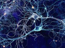 Как мозг связывает события, чтобы сформировать память? Исследование выявляет неожиданные психические процессы