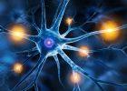 """Ученые находят мозговой центр, который """"глубоко"""" закрывает боль"""