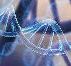 Исследование предполагает увеличение фертильности у женщин с геном неандертальца
