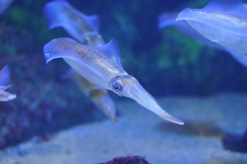 Ученые проектируют клетки человека с кальмароподобной прозрачностью