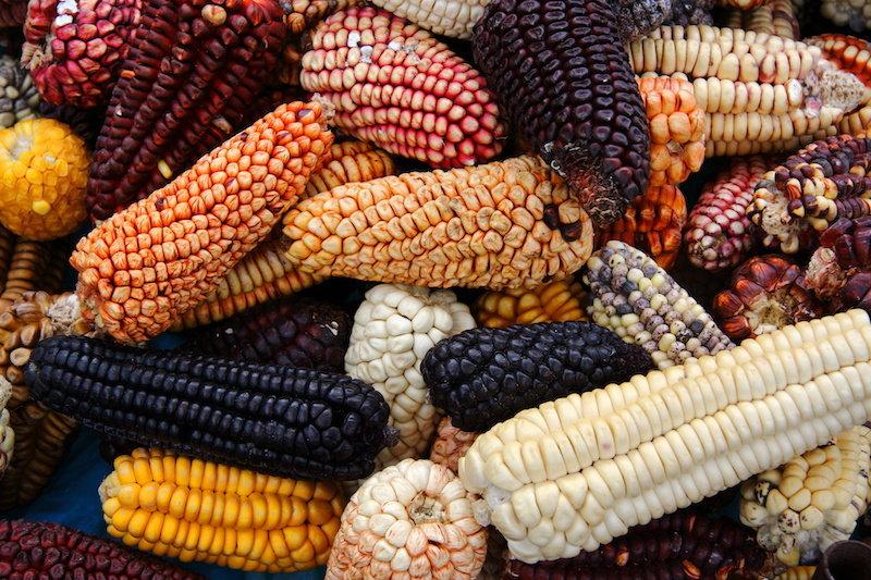 Исследователи документируют первое использование кукурузы в Мезоамерике