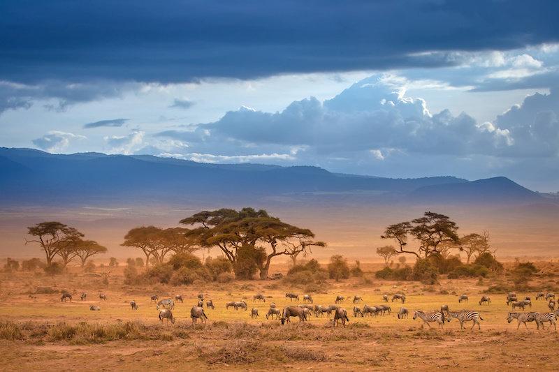 Охота в саванноподобных ландшафтах могла подливать реактивное топливо в эволюцию мозга