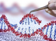 Световой «CRISPR» запускает точное редактирование генов и сверхбыстрое восстановление ДНК