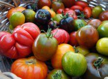 Скрытые мутации томата выявлены при исследовании 100 сортов