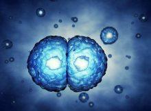Процесс самоедания стволовых клеток может быть ключом к новой регенеративной терапии