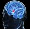 Два различных контура приводят к торможению сенсорного таламуса мозга
