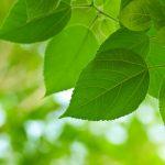 Как справиться с поглощением углекислого газа растениями