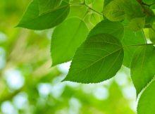 Почему растения зеленые?