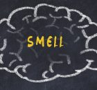 Обнюхивать запах: как мозг организует информацию об запахах