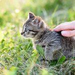 Забота о кошках? То же самое делали люди на Шелковом пути более 1000 лет назад
