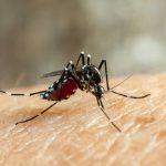 Исследователи превращают самок комаров в не кусающих самцов для борьбы с комарами