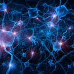 МРТ-сканирование головного мозга 130 млекопитающих, включая человека, показывает равную связность