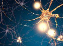 Определены типы клеток мозга, которые могут подтолкнуть мужчин к борьбе и сексу