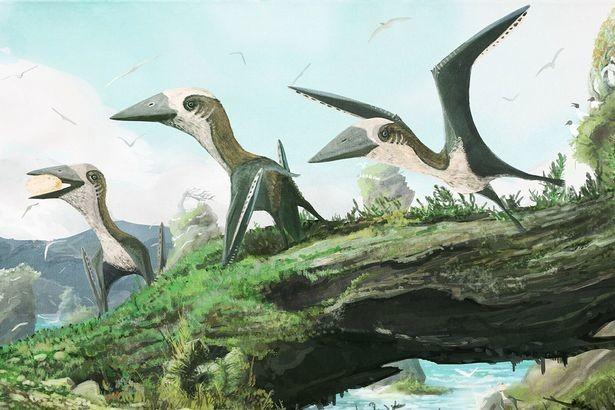 Обнаружен крошечный древний родственник динозавров и птерозавров