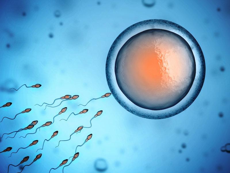 Как человеческая сперма действительно плавает: новое исследование бросает вызов многовековому предположению