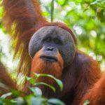 Антропологи сравнивают комплексный показатель физиологического нарушения регуляции у людей и других приматов