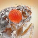 Оптические иллюзии в глазах мухи