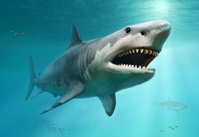 Истинный размер доисторической мега-акулы наконец-то раскрыт