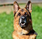 Отслеживание рабочих собак 11 сентября