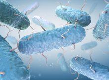 Бактерии E. coli предлагают путь к улучшению фотосинтеза