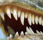 Исследование зубов динозавров доказало, что гигантский хищный динозавр жил в воде