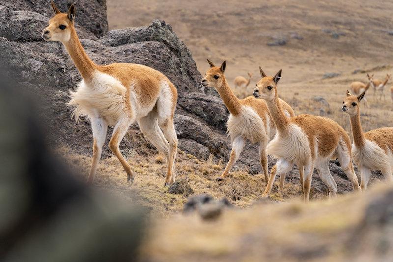 Исследователи полагают, что ранние американские охотники на крупную дичь были женщинами