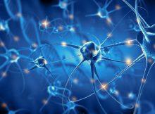Исследования выявляют в мозгу «регулятор громкости», который поддерживает обучение и память