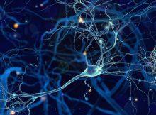 Изнутри: как мозг формирует сенсорные воспоминания