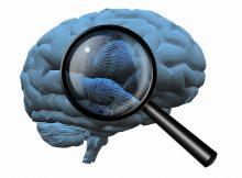 """Воспоминания создают """"отпечатки пальцев"""", которые показывают, как устроен мозг"""