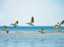 Волна под их крыльями
