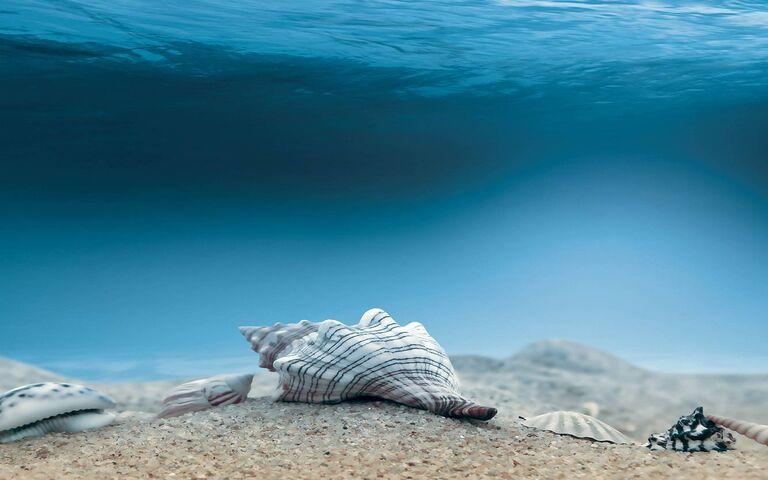 Полностью забронирован на дне моря: кажется, что на песчинках нет места новым бактериям