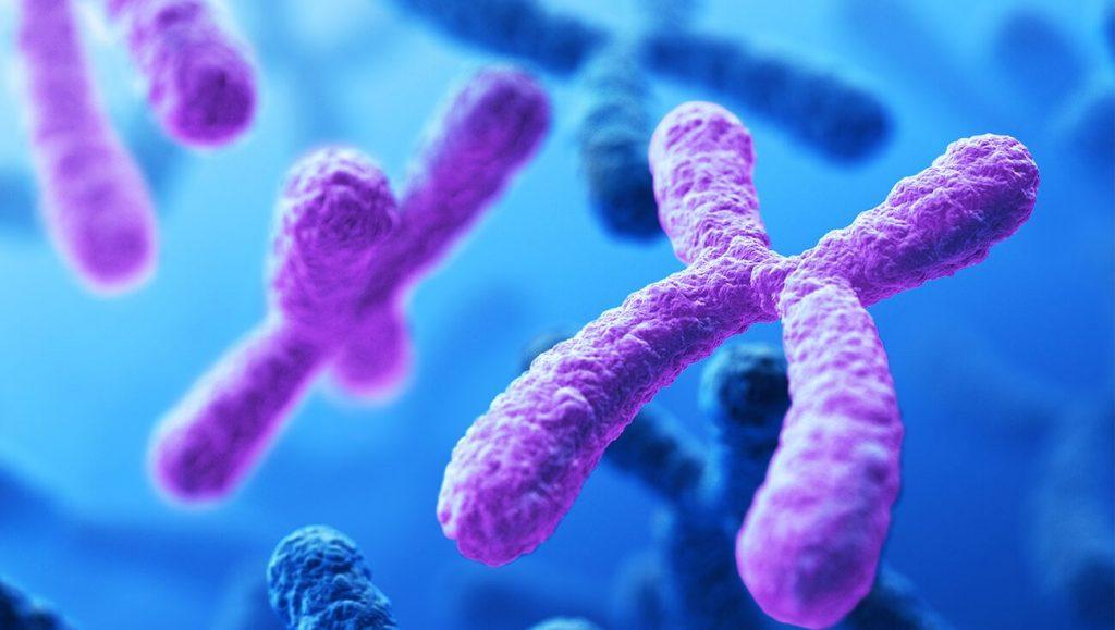 Разделение хромосом в фокусе