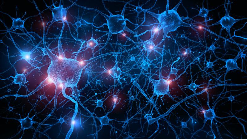 Ученые обращают вспять возрастную потерю памяти у мышей