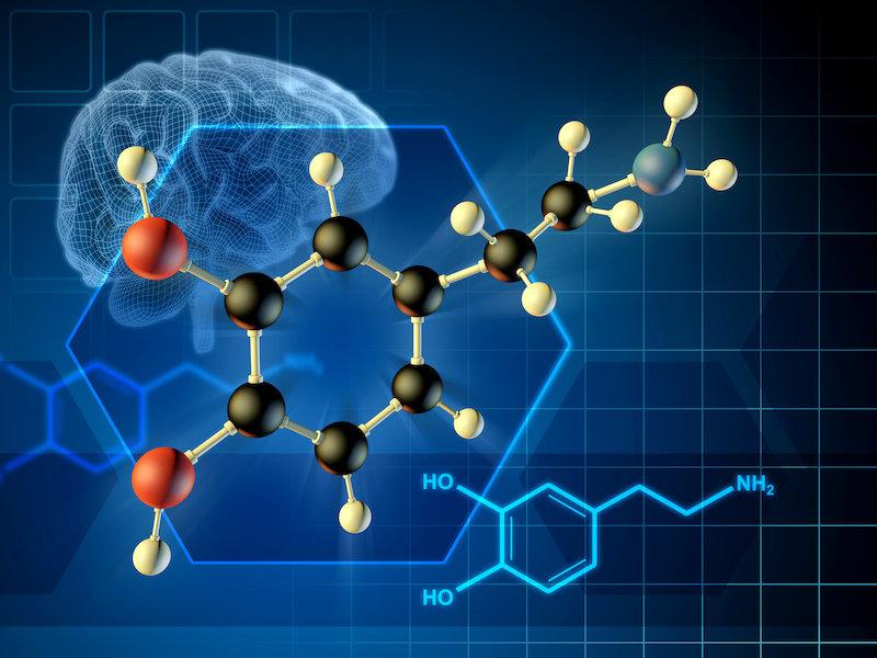 Новое исследование показывает, что мозговой мессенджер Feel Good можно сознательно контролировать